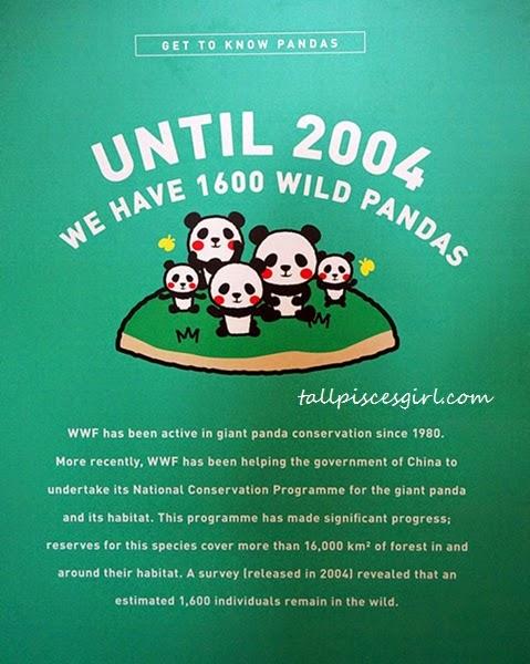 1600 Pandas Invasion @ Publika KL #1600PandasMY 2