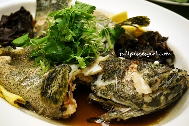 Steamed Dragon Garoupa with Bean Curds and Black Fungus in King Soy Sauce (鲜竹云耳蒸龙虎斑)
